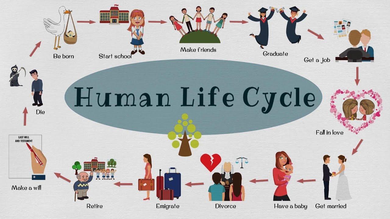 Ketahui 5 Fase Strategi Human Capital Life Cycle Untuk Mencetak SDM Unggul